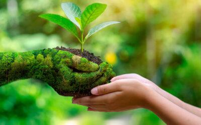 Environmental Values in Islam
